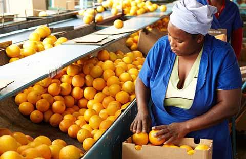 Arance Sudafrica