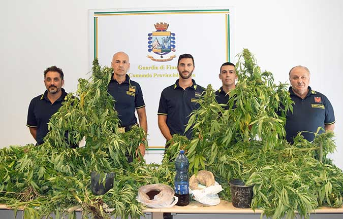 Piantagione di marijuana a Centuripe (Enna)