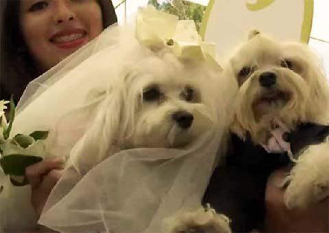 Anche i cani si sposano